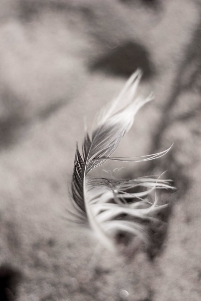 Stock Photo: 1838-14254 Feather Sticking Upright in Sand