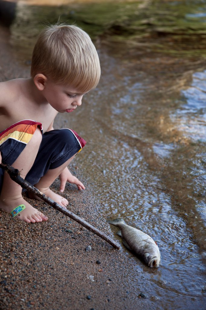 Stock Photo: 1838-14368 Young Boy Looking at Dead Fish at Edge of Lake