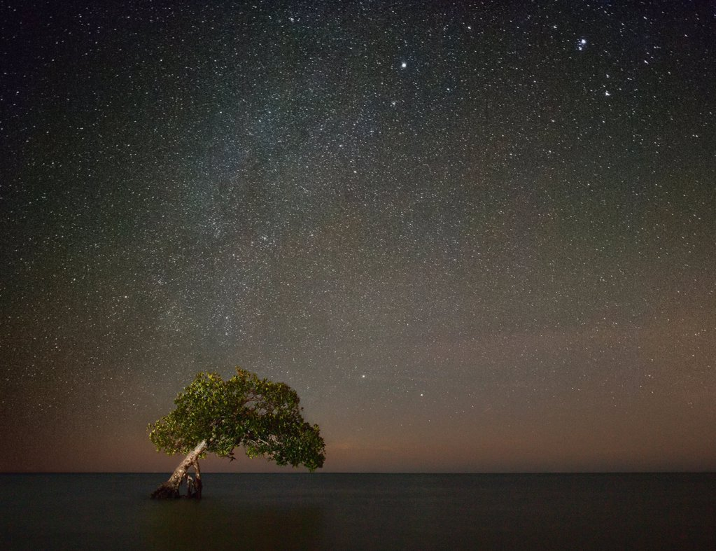 Stock Photo: 1838-14432 Tree in Shallow Water With Starry Sky at Night