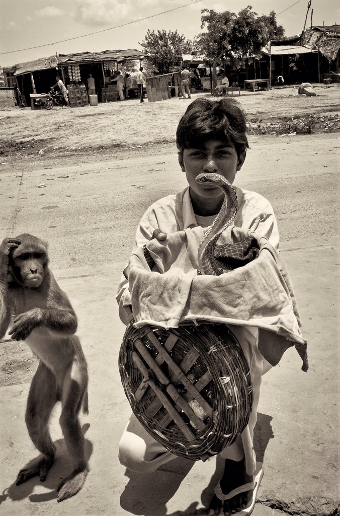 Young Man With Cobra and Monkey, Agra, India : Stock Photo