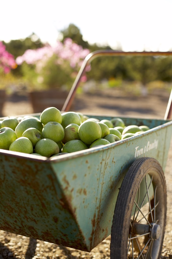 Wagon Full of Apples  : Stock Photo