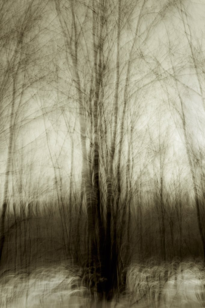 Motion Blur Winter Trees  : Stock Photo