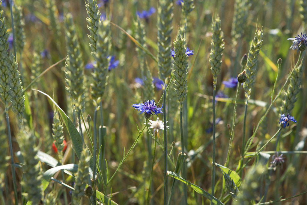 Stock Photo: 1838-9056 Wildflowers