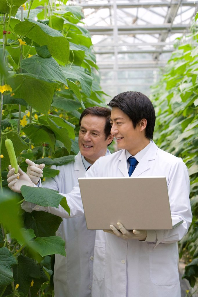 Stock Photo: 1839R-18305 Scientists doing research in modern farm