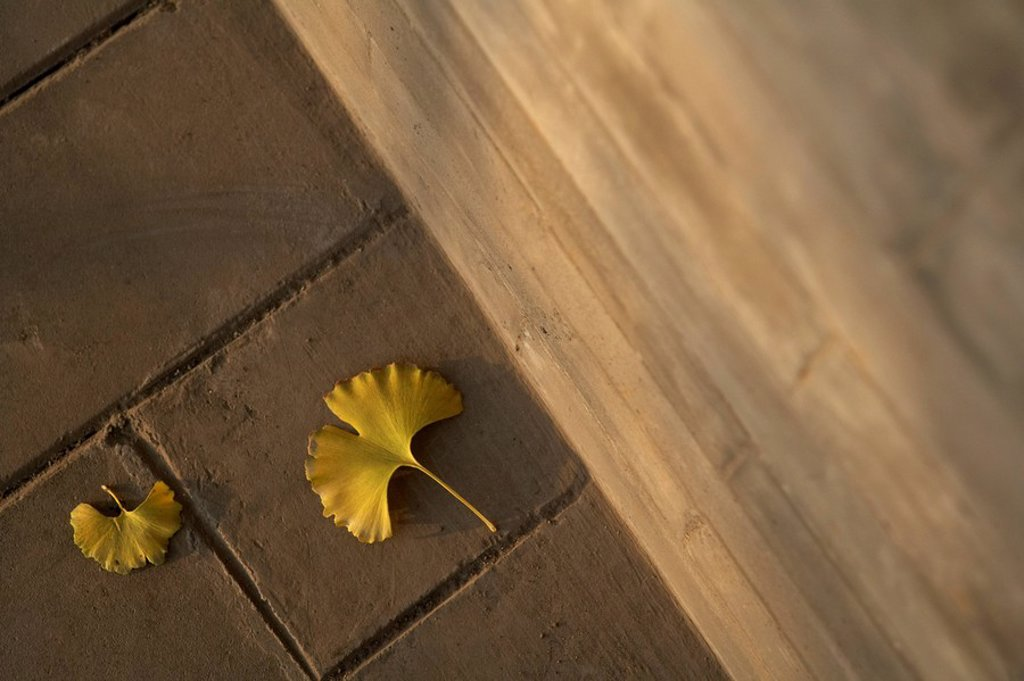Two Yellow Leaves That Have Fallen To The Ground : Stock Photo