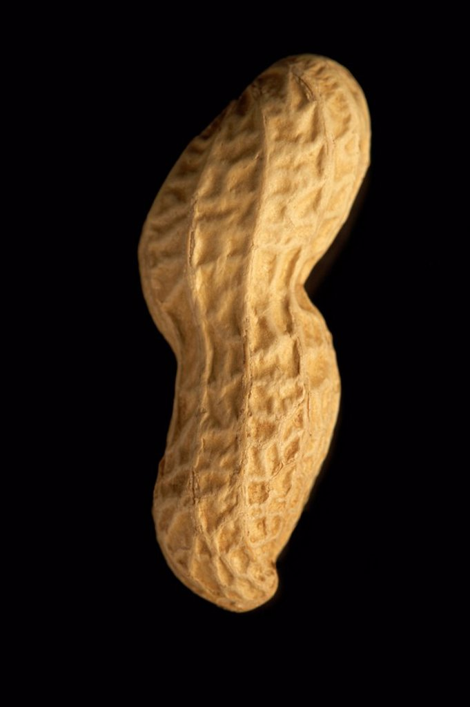 A peanut in shell : Stock Photo