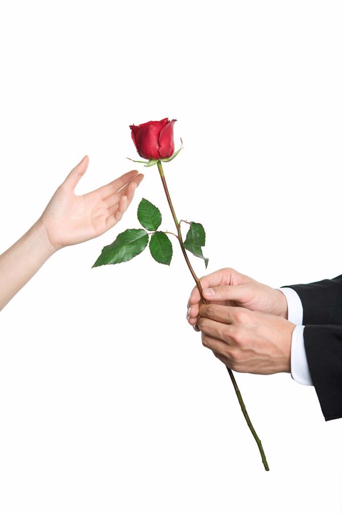 Stock Photo: 1839R-8026 Gifting a rose