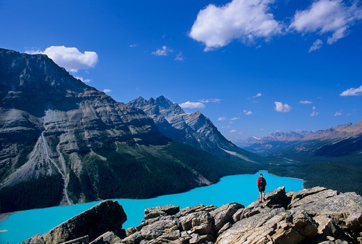 Stock Photo: 1840-12843 Hiker overlooking turquoise-colored Peyto Lake near Bow Summit along the ice fields Parkway in Banff National Park, British Columbia, Canada.