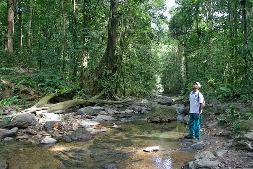 Trinidad, Rain Forest : Stock Photo