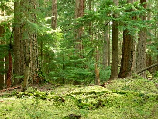 Woodland Scene On Orcas Island Washington State San Juan Islands : Stock Photo