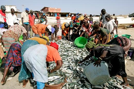 Gambia, Tange Beach, Fish Haul : Stock Photo