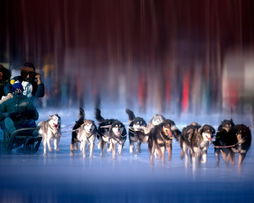 Stock Photo: 1840-25951 Dogs, Huskies