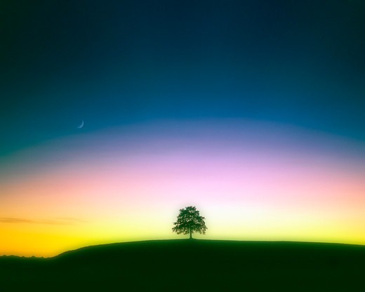 Tree on a Hill at dusk : Stock Photo