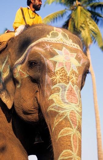 Stock Photo: 1840-35778 Goa, Decorated Elephant