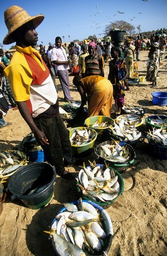 Gambia A Crowded Fish Market On The Beach : Stock Photo