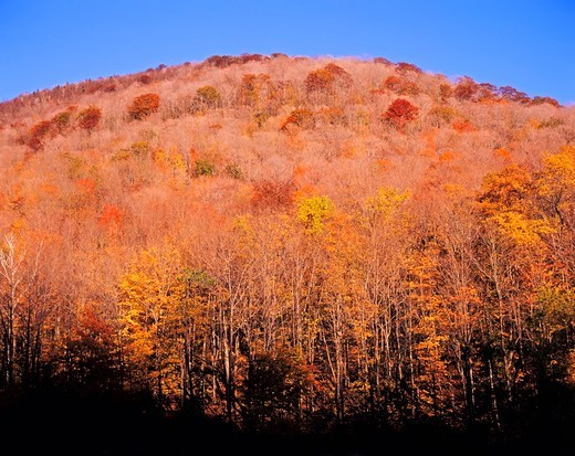 Fall Colors, Forever Wild Lands, Stoney Clove Area, Catskill Mountains, Ulster County, New York State, America : Stock Photo