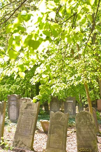 Jewish Cemetery, Lodz, Poland : Stock Photo