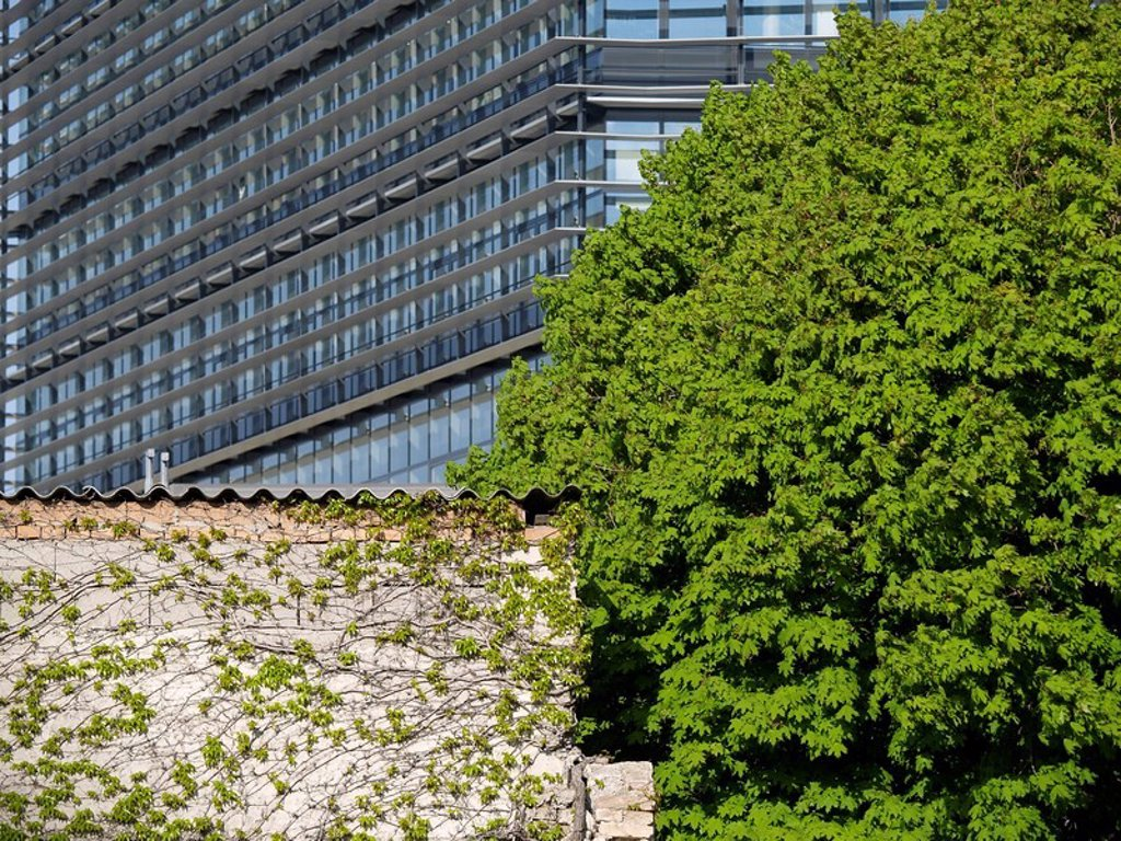 Stock Photo: 1841-1073 Tree in front of office building, Architektur Consult ZT GmbH, T_Center St. Marx, Vienna, Austria