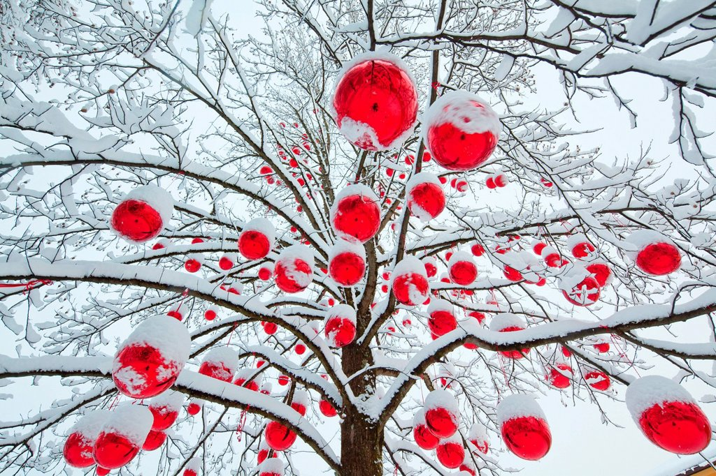 Stock Photo: 1841-109971 Christmas baubles in snowy tree on the Christmas market in Salzburg, Austria