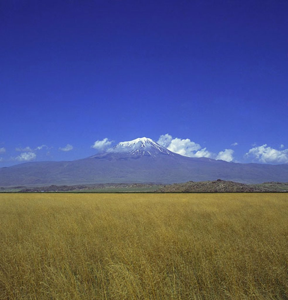 Panoramic view of field with mountain in background, Mt Ararat, Turkey : Stock Photo