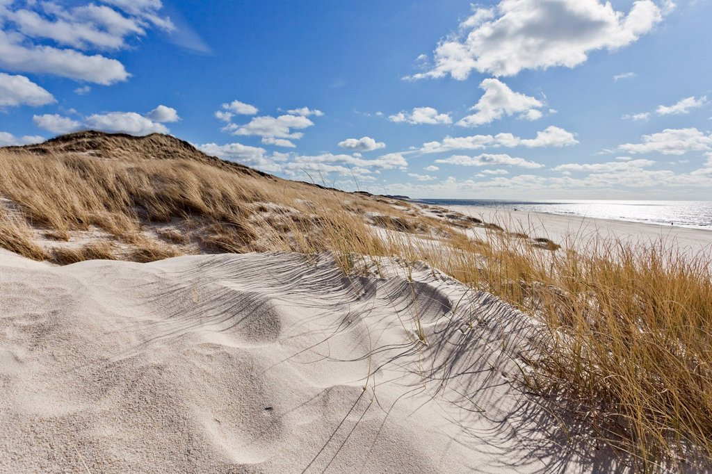 Dunes and North Sea, Sylt, Schleswig_Holstein, Germany, Europe : Stock Photo