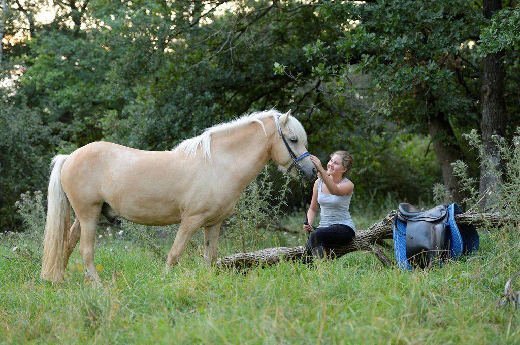 Girl caressing horse : Stock Photo