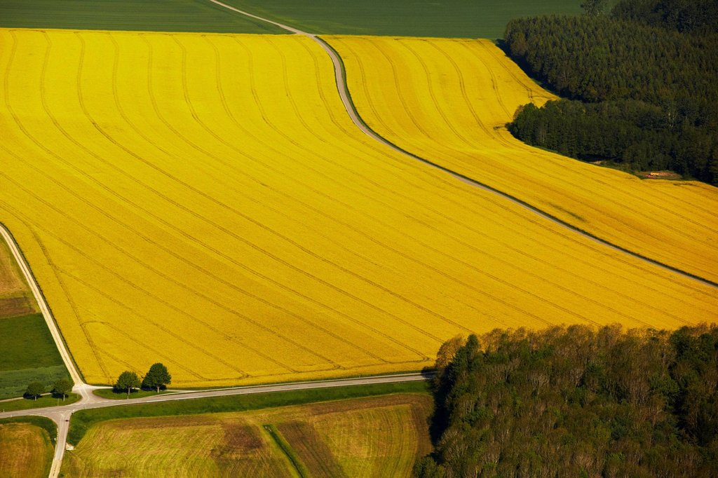 Stock Photo: 1841-124580 Blooming rapefield, aerial photo