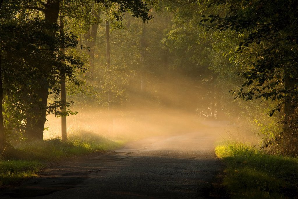 Fog covered road passing through forest, Spreewald, Brandenburg, Germany : Stock Photo