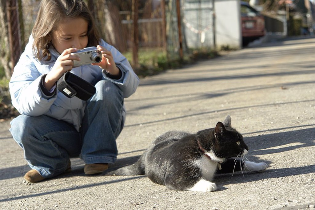 cat animal pet tomcats paw ear tail cat tail stain photograph photocopy take a picture child girls scene models patterned play playful kitten hangover young animal house cat pet skin hair hairy existing alive : Stock Photo