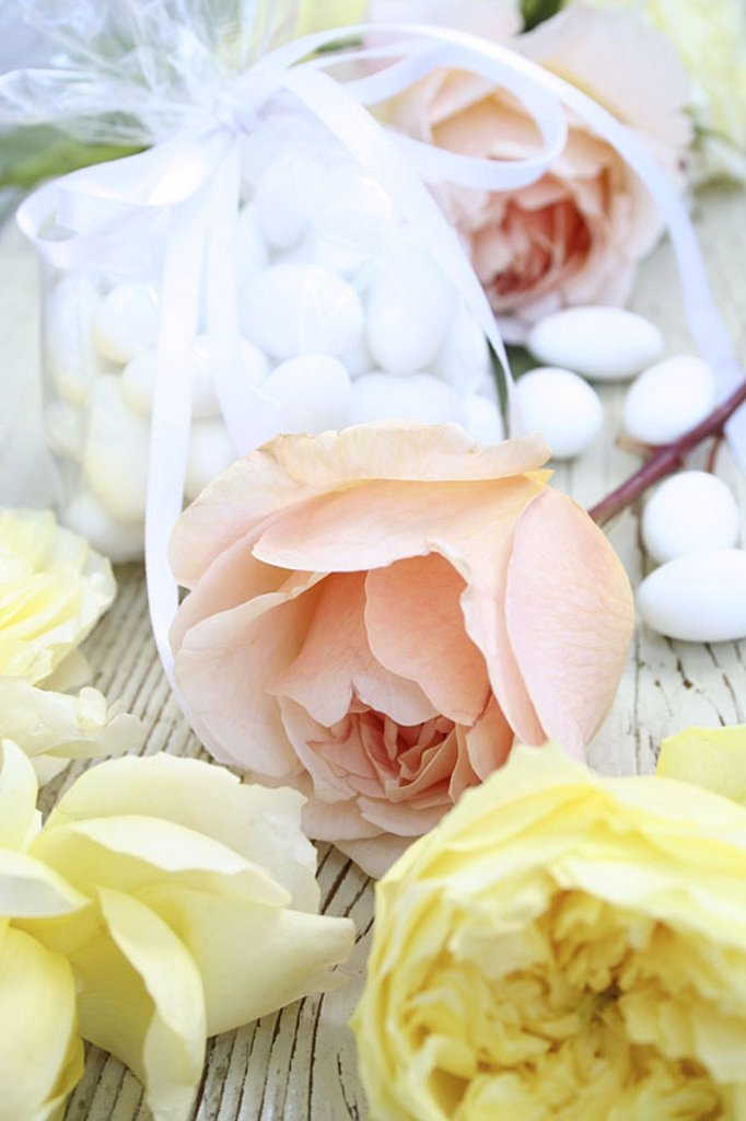 Stock Photo: 1841-16590 Close_up of roses