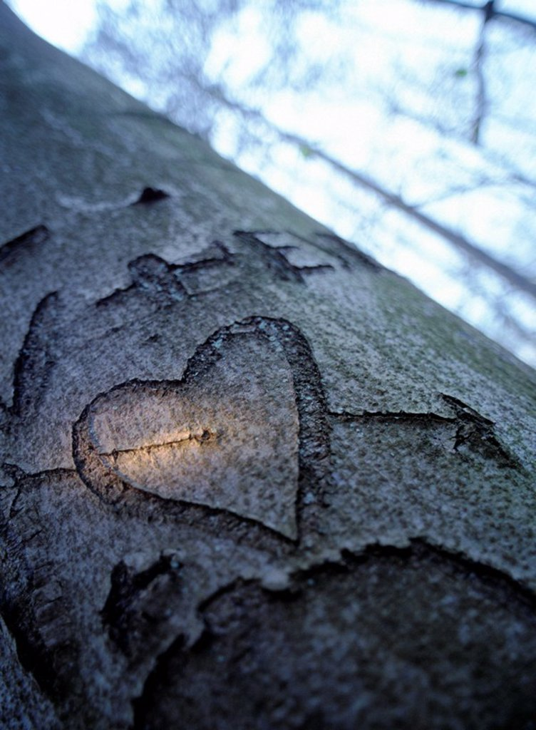 Stock Photo: 1841-20944 Heart shape carved on tree trunk
