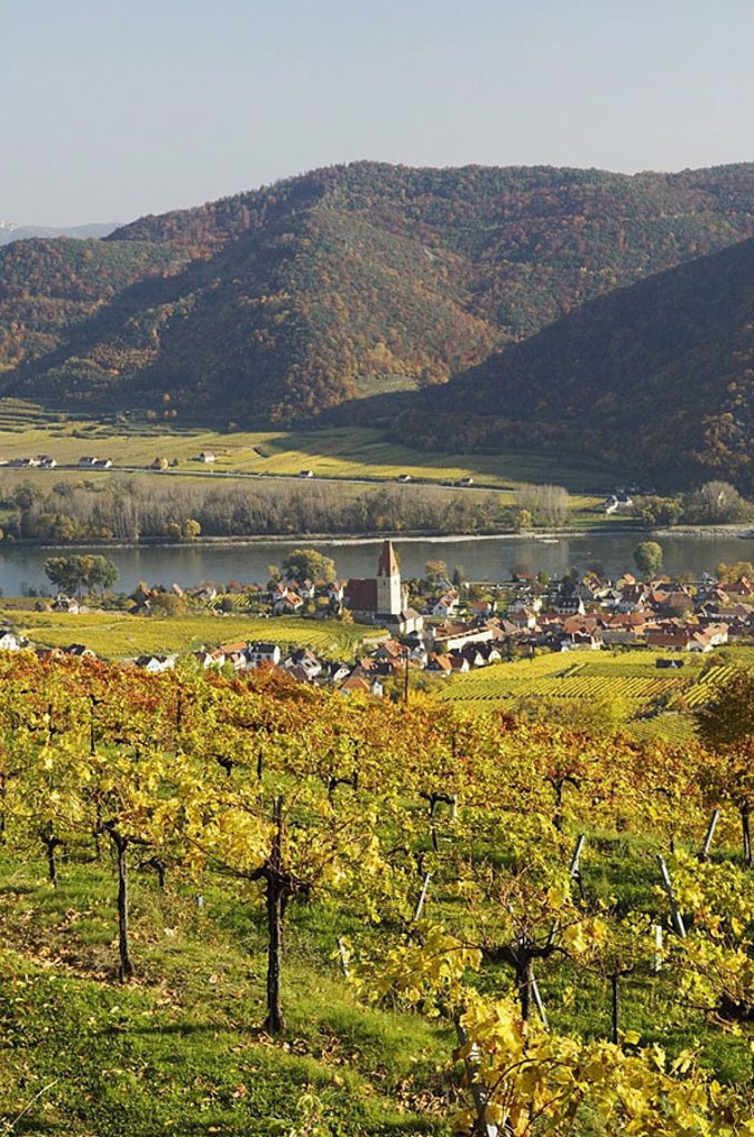 Stock Photo: 1841-23716 Vineyard with houses in village, Wachau, Austria