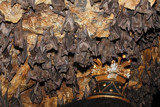 Group of bats, Pura Goa Lawah Temple, Bali : Stock Photo
