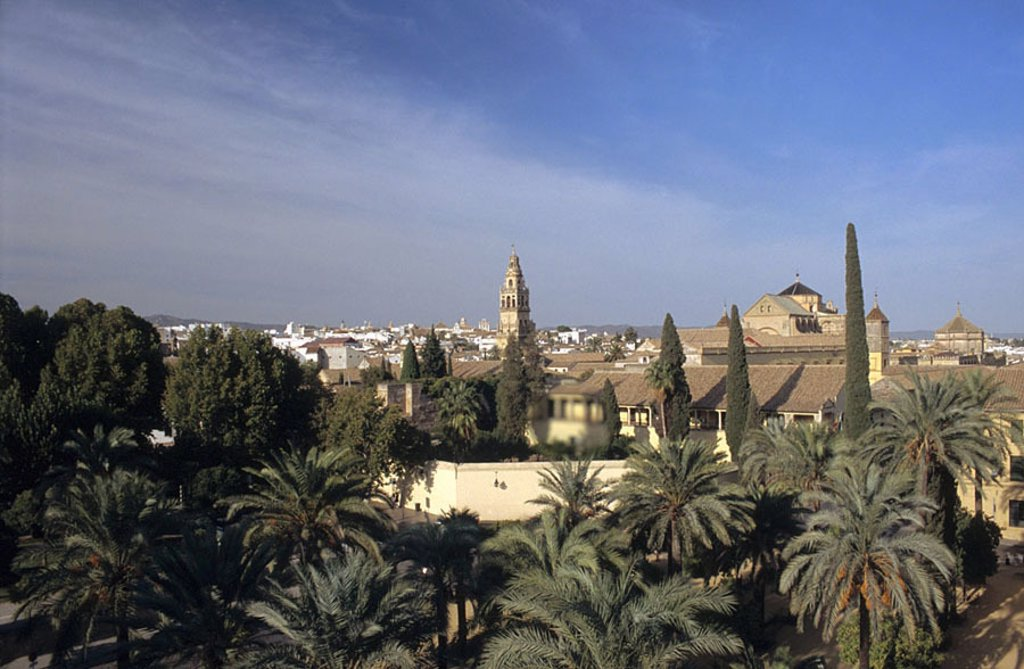 High angle view of palm trees in city, Cordoba, Andalusia, Spain : Stock Photo
