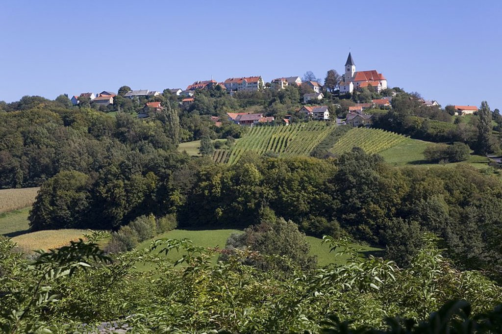 Stock Photo: 1841-30875 Vineyard in front of bell tower on hill, Sankt Anna am Aigen, Styria, Austria