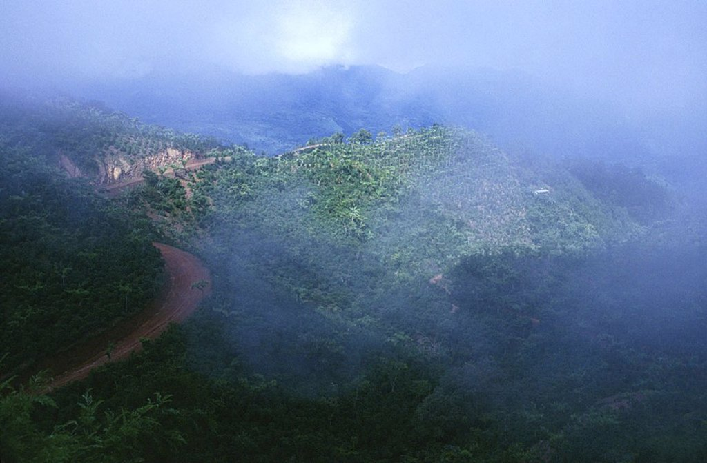 Stock Photo: 1841-31715 High angle view of forest covered with fog, Guatemala, Mexico