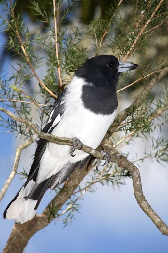 Close_up of bird perching on branch : Stock Photo
