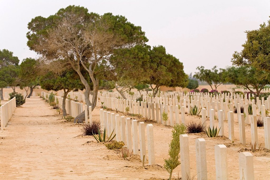 Stock Photo: 1841-32941 Graves in military cemetery, El Alamein, Western Desert, Egypt