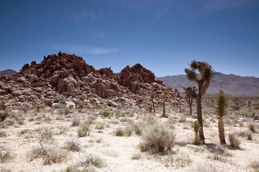 Stock Photo: 1841-35094 Joshua Tree National Park, California, USA