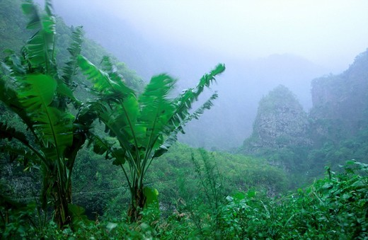 Stock Photo: 1841-37091 Fog over forest, Antilles