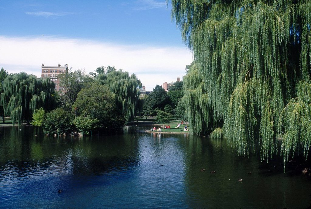Trees around pond, Public Gardens, Boston, Massachusetts, USA : Stock Photo
