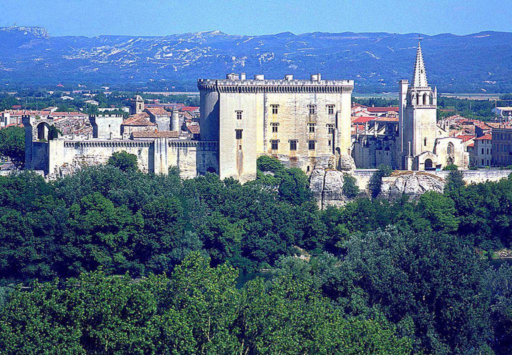 Trees in front of castle, Tarascon Castle, Tarascon, Bouches_Du_Rhone, Provence_Alpes_Cote D´Azur, France : Stock Photo
