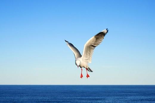 Close_up of bird in flight : Stock Photo