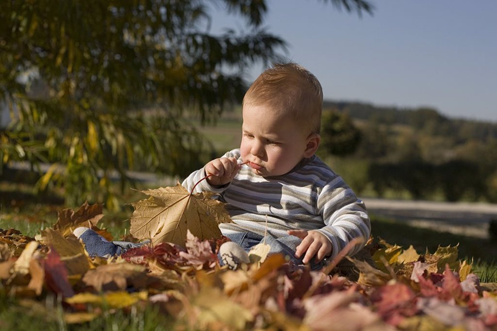 grass bitter fall leaves babies bite ground lad boy boy try out chew child colored concentrated concentration curiosities curious day bright upbringing enjoy Germany graze horizontal people small child kids leaf leaves verse to : Stock Photo