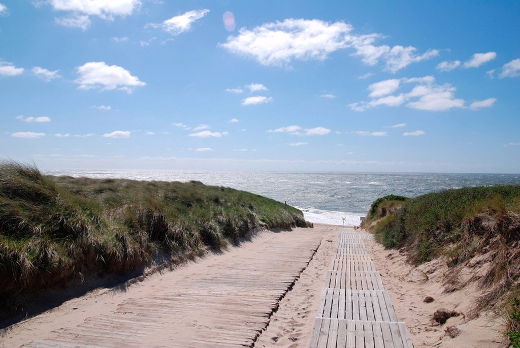 Wooden path leading to sea : Stock Photo