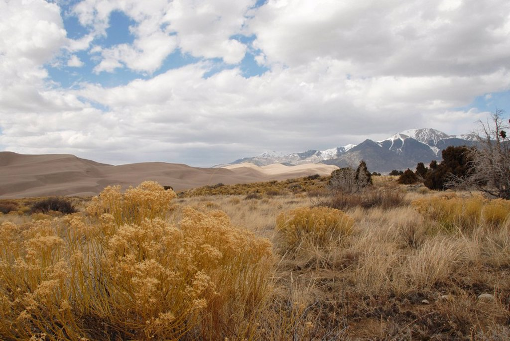 Bushes in desert, Great Sand Dunes National Park, Colorado, USA : Stock Photo