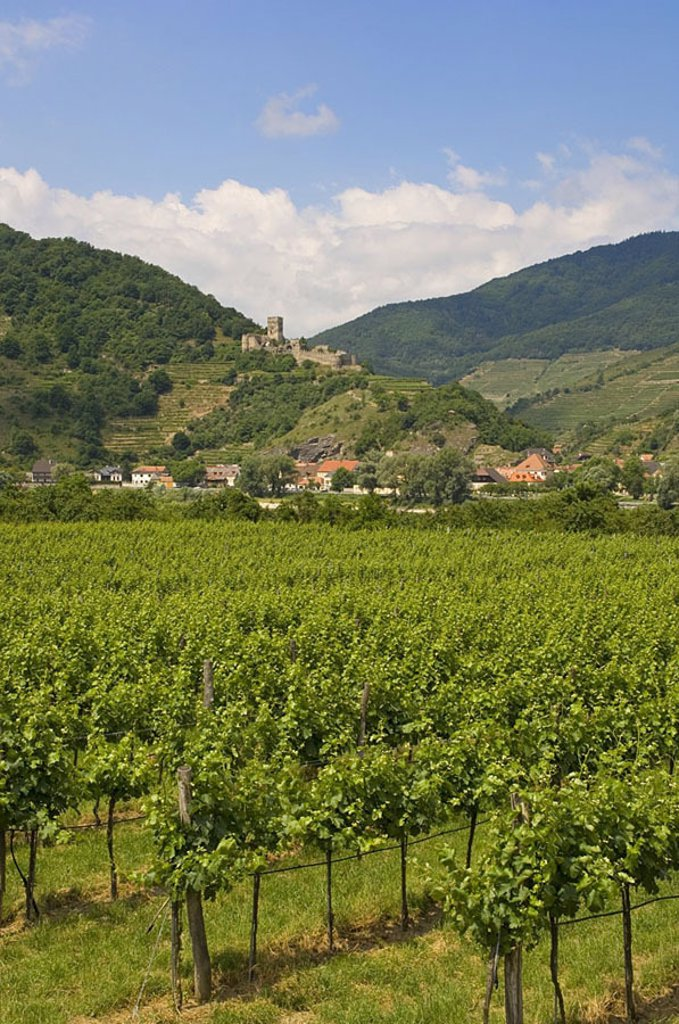 Panoramic view of vineyard with castle in background, Hinterhaus Castle, Wachau, Austria : Stock Photo