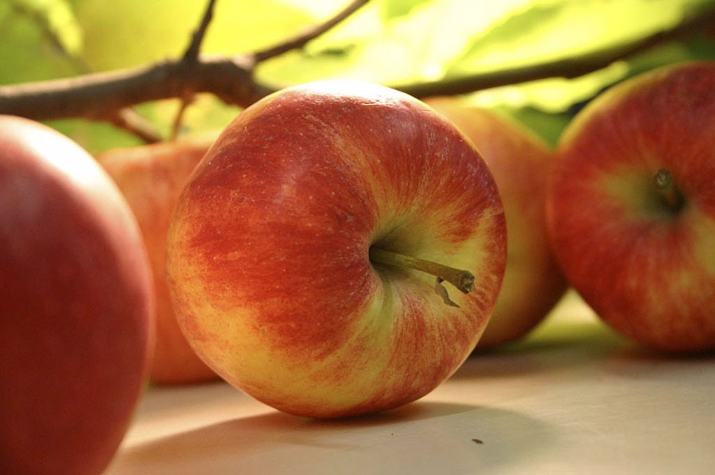 Stock Photo: 1841-51938 row of red apples, close_up