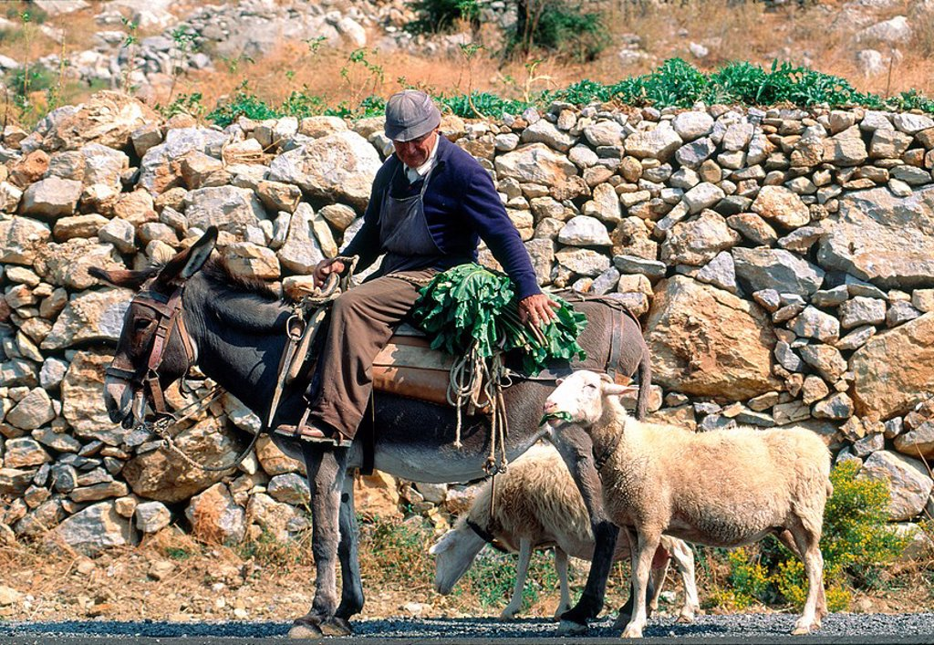 Side profile of man sitting riding donkey with goat on road, Greece : Stock Photo