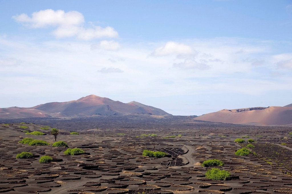 La Geria, Lanzarote, Canary Islands, Spain, Europe : Stock Photo